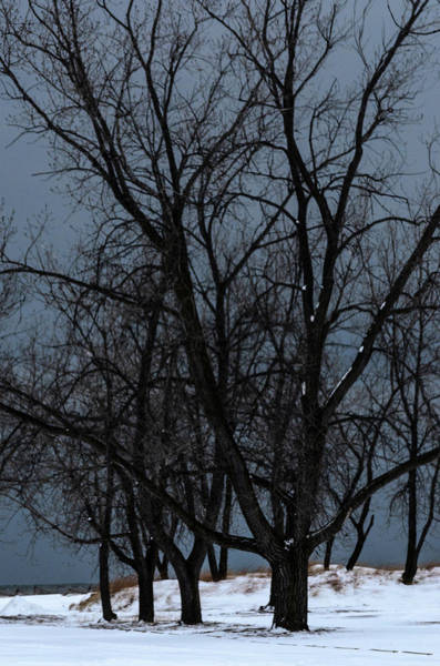 Photograph - I See Trees... by Stewart Helberg