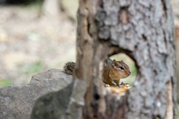 Photograph - I See You Thru The Hole by Dan Friend