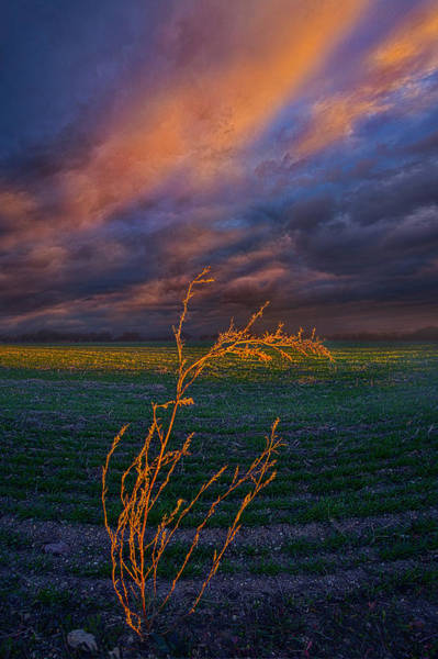 Photograph - I Was Here For A Moment And Then I Was Gone by Phil Koch