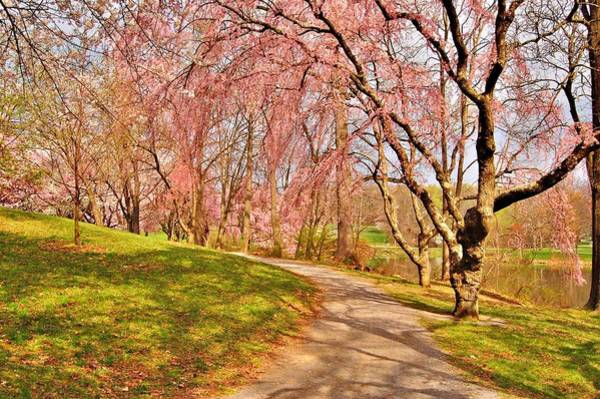 Photograph - I Will Follow You If You Follow Me - Holmdel Park by Angie Tirado