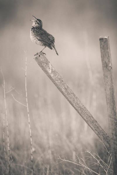 Photograph - I Will Sing A Song by John De Bord