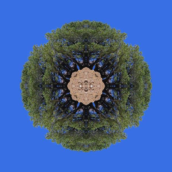 I Will Survive Tree Kaleidoscope Art Print
