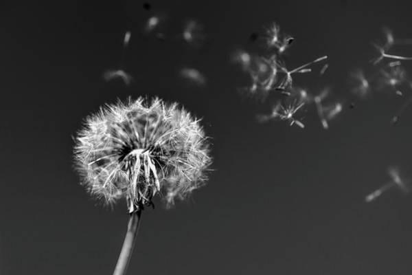 Photograph - I Wish I May I Wish I Might Love You by Scott Campbell