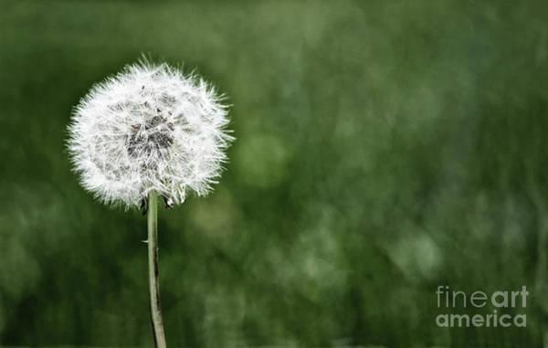 Photograph - I Wish I May by Karen Adams