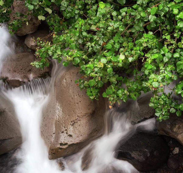 Photograph - Iao Valley River by Christopher Johnson