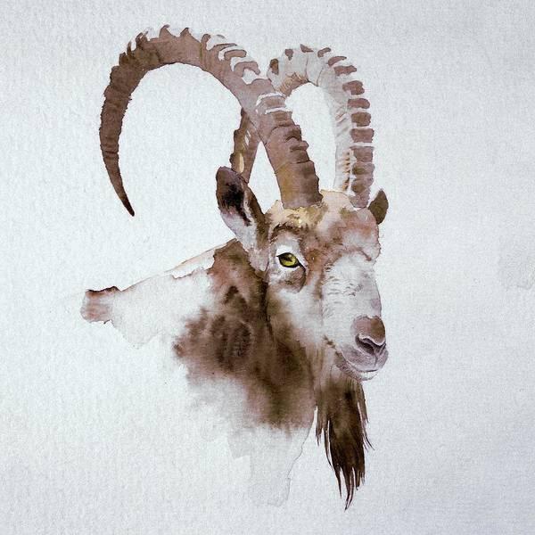 Painting - Ibex by Attila Meszlenyi