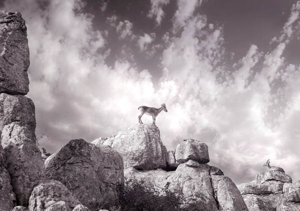 Spanish Ibex Photograph - Ibex -the Wild Mountain Goats In The El Torcal Mountains Spain by Mal Bray