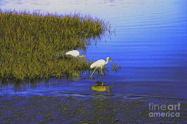 Photograph - Ibis Morning 2 by Kathi Shotwell