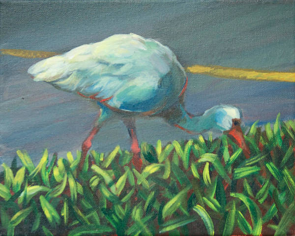 In Service Painting - Ibis Study by Vanessa Bates