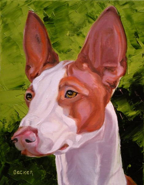 Wall Art - Painting - Ibizan Hound by Susan A Becker