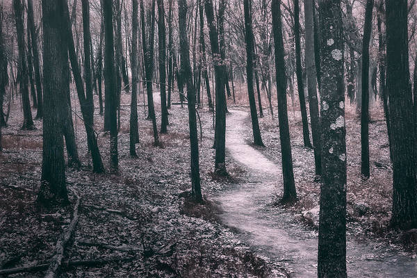 Wall Art - Photograph - Ice Age Trail Near Lapham Peak by Scott Norris