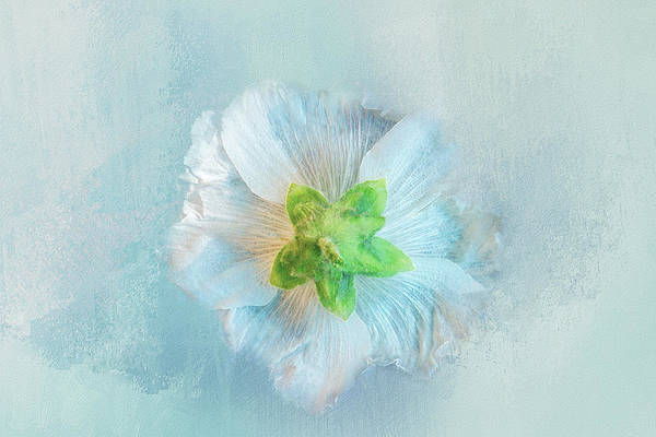Ice Plant Digital Art - Ice Blue Under by Terry Davis