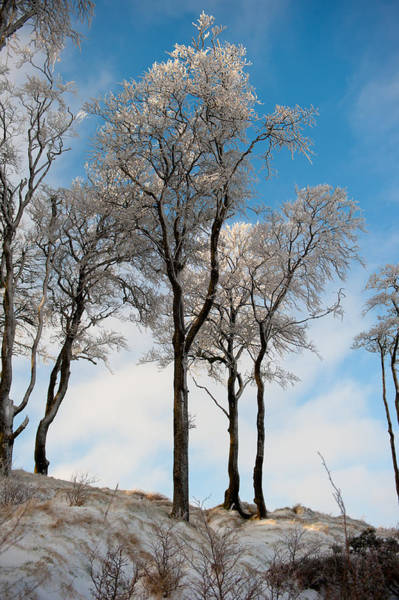 Photograph - Ice Covered Trees by Helen Northcott