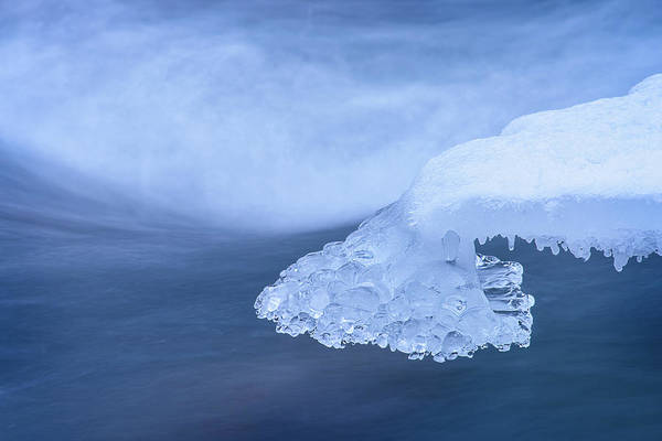 Photograph - Ice Paw by Michael Blanchette