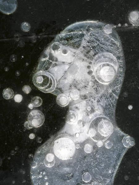 Photograph - Ice Portrait - Lake Wingra - Madison - Wisconsin by Steven Ralser