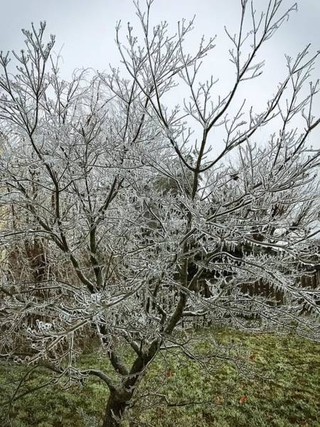 Photograph - Ice Storm by Chris Montcalmo