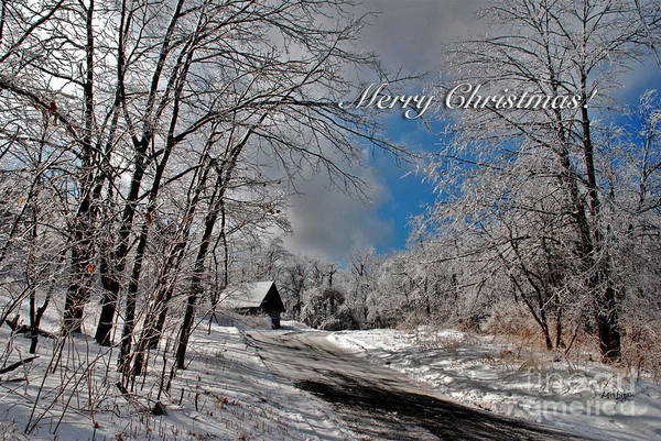 Photograph - Ice Storm Christmas Card by Lois Bryan