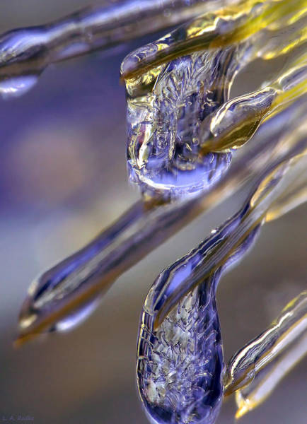 Photograph - Ice Storm II by Lauren Radke