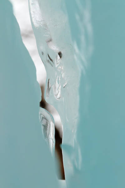 Photograph - Ice by Susan Rissi Tregoning