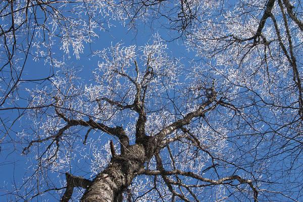 Photograph - Ice Tree Blue Sky by Paul Rebmann