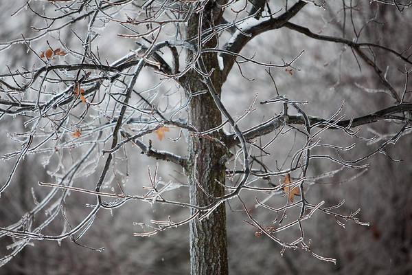 Ice Tree Art Print