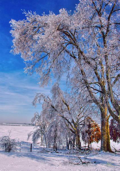 Photograph - Ice Trees In Sun by Sam Davis Johnson