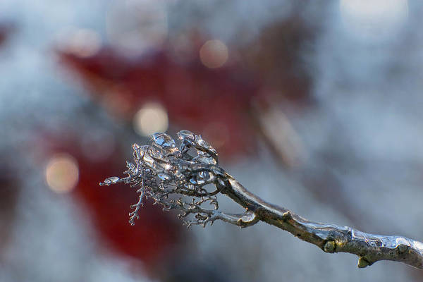 Photograph - Ice Wand by Jane Melgaard