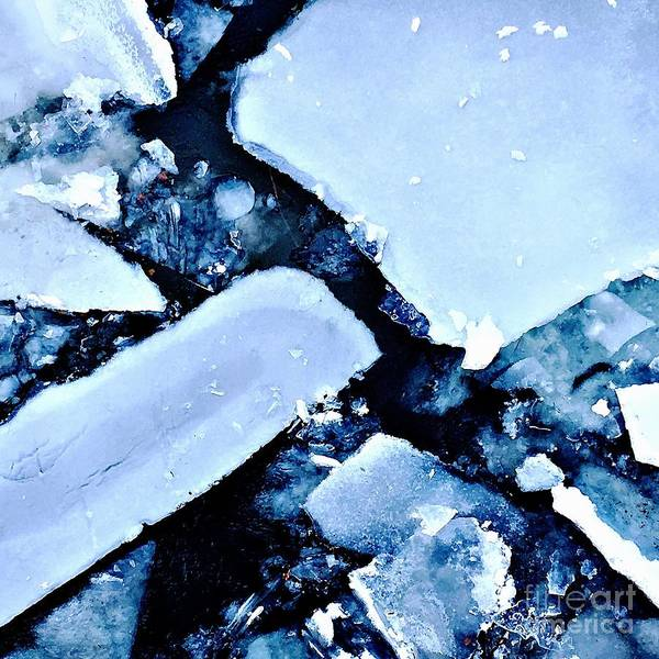 Photograph - Iced Beauty #2 by Edit Kalman