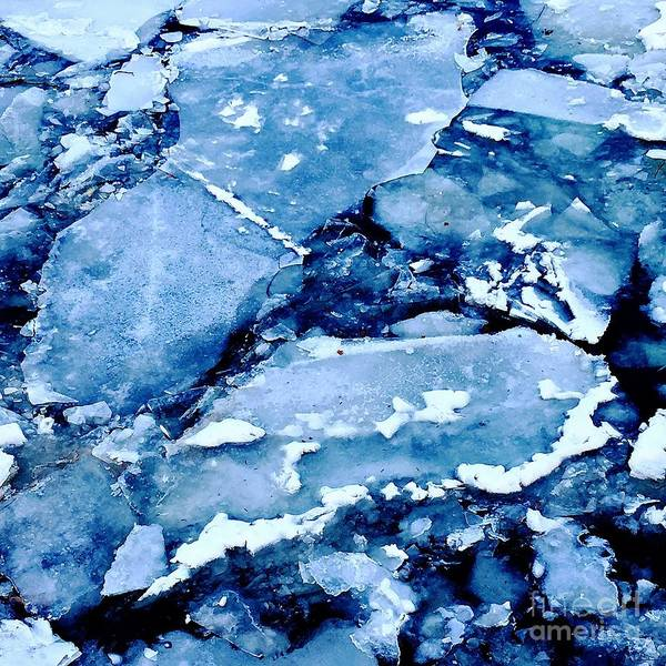 Photograph - Iced Beauty #5 by Edit Kalman