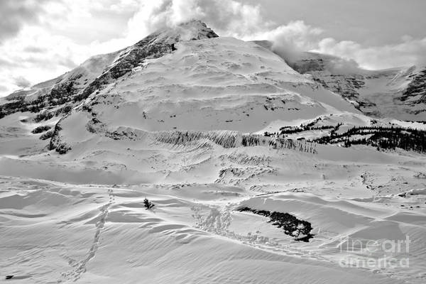 Photograph - Icefields Center Peaks Black And White by Adam Jewell