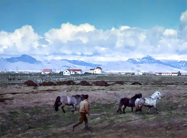 Photograph - Iceland Horses 1962 by Richard Goldman