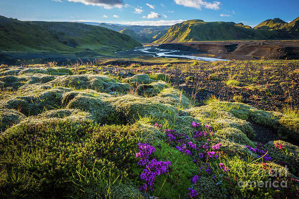 Glacial Photograph - Iceland Moss by Inge Johnsson