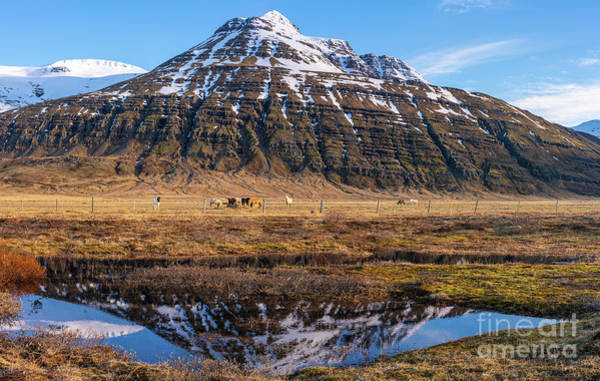 Wall Art - Photograph - Iceland Ring Road Horse Pastures by Mike Reid