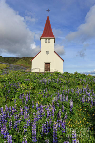 Photograph - Icelandic Church Among The Fields Of Lupine by Edward Fielding