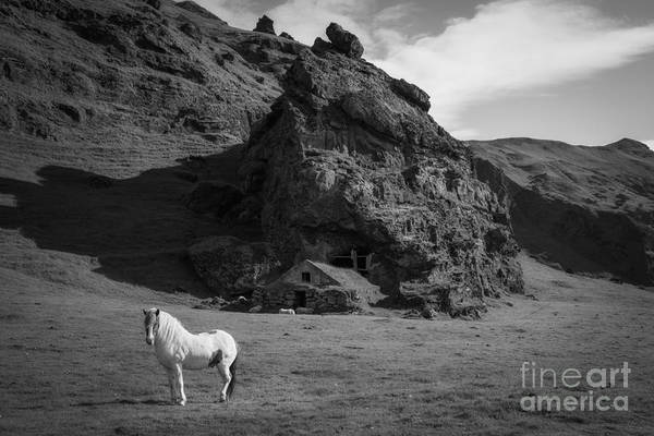 Mv Photograph - Icelandic Horse And Cave Shelter Bw by Michael Ver Sprill
