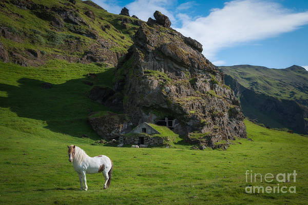 Sheep Rock Wall Art - Photograph - Icelandic Horse And Cave Shelter by Michael Ver Sprill