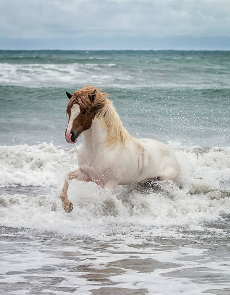 Wall Art - Photograph - Icelandic Horse In The Sea, Longufjorur by Panoramic Images