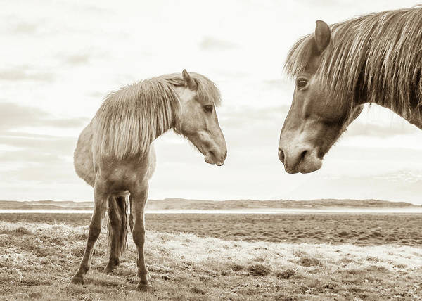 Photograph - Icelandic Mare And Foal #2 by Tom and Pat Cory
