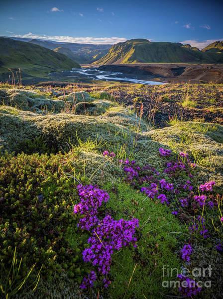 Photograph - Icelandic Moss by Inge Johnsson