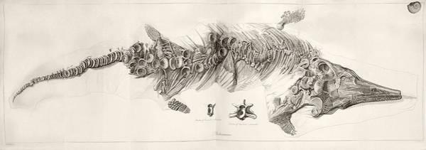 Wall Art - Photograph - Ichthyosaur Skeleton Engraving 1819 Home by Paul D Stewart