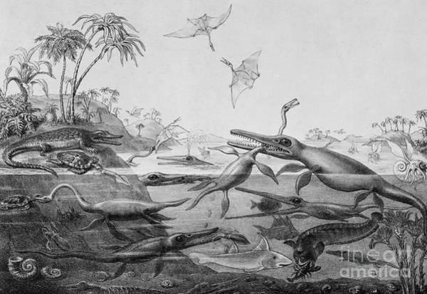 Wall Art - Drawing - Ichthyosaurur, Plesiosaurus, Pterodactylus, Duria Antiquior  by English School