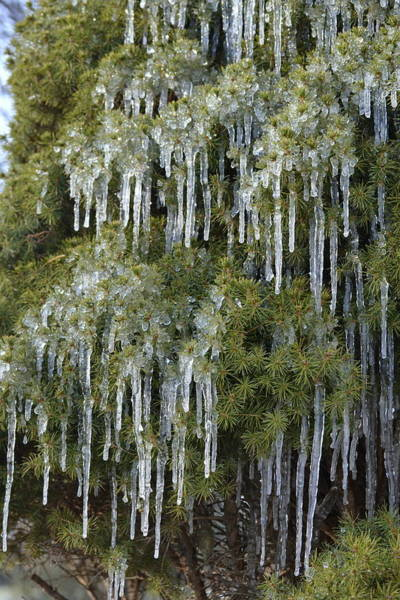 Photograph - Icicle Cascade by JD Grimes