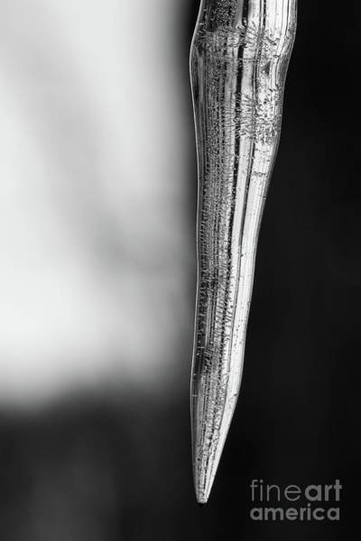 Icicles Wall Art - Photograph - Icicle Macro Black And White  by Michael Ver Sprill