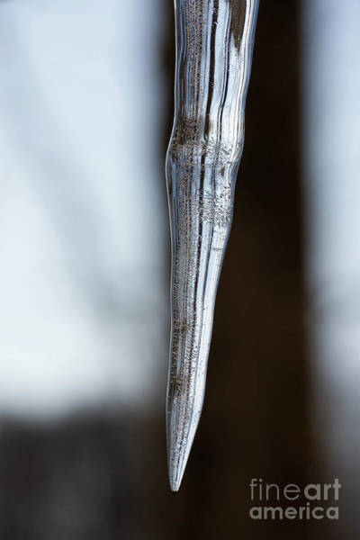 Icicles Wall Art - Photograph - Icicle by Michael Ver Sprill