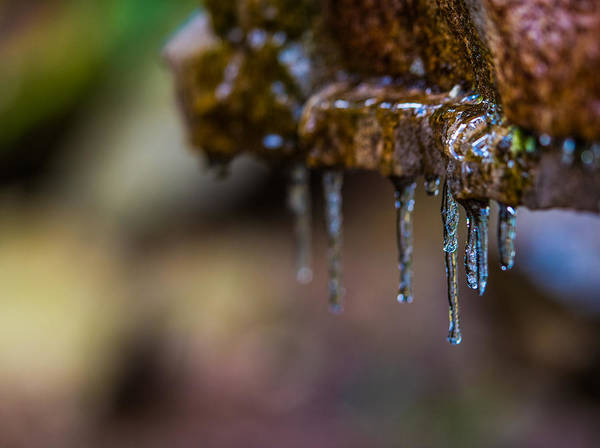 Swallow Falls State Park Wall Art - Photograph - Icicles 1 by Dan Ketelsen