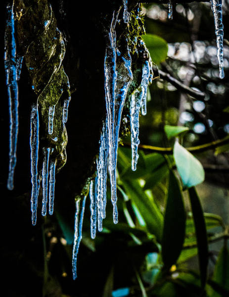 Swallow Falls State Park Wall Art - Photograph - Icicles 3 by Dan Ketelsen