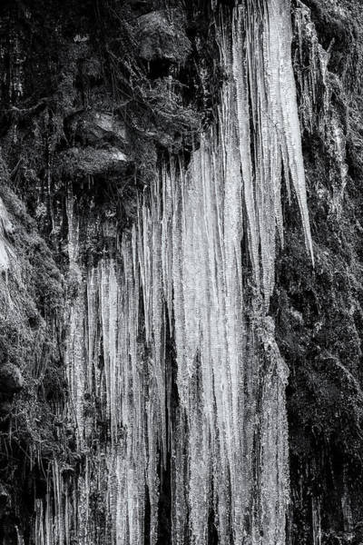 Photograph - Icicles, No. 5 Bw by Belinda Greb