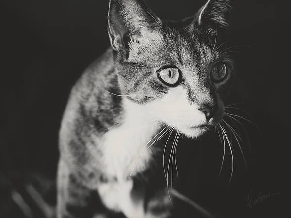 Photograph - Ickis The Cat by Kharisma Sommers