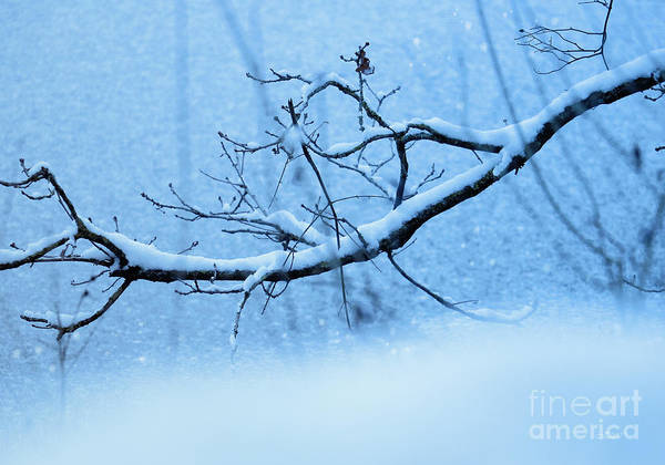 Photograph - Icy Blue Winter by Jutta Maria Pusl