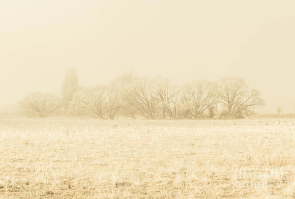 Early Winter Wall Art - Photograph - Icy Cold Foggy Woodland by Jorgo Photography - Wall Art Gallery